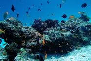 ◆冬季限定◆水納島プチ上陸&写真サービス付き!体験ダイビング