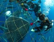 世界初の海洋牧場!ジンベエザメ体験ダイビング