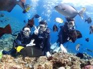 サンゴと熱帯魚に会えるボート体験ダイビングツアー
