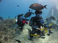 【1グループ貸切プラン】青の洞窟シュノーケル&美ら海体験ダイビングSET ≪らくらくボート開催/無料写真撮影サービス付き≫