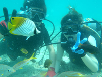 青い海の中を独り占め!体験ダイビング