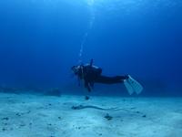 慶良間諸島/半日チービシ体験ダイビング&スノーケルセット