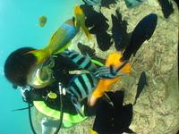 2大スポットを巡るステップアッププラン! 青の洞窟シュノーケル+サンゴの楽園+クマノミ&熱帯魚体験ダイビング!